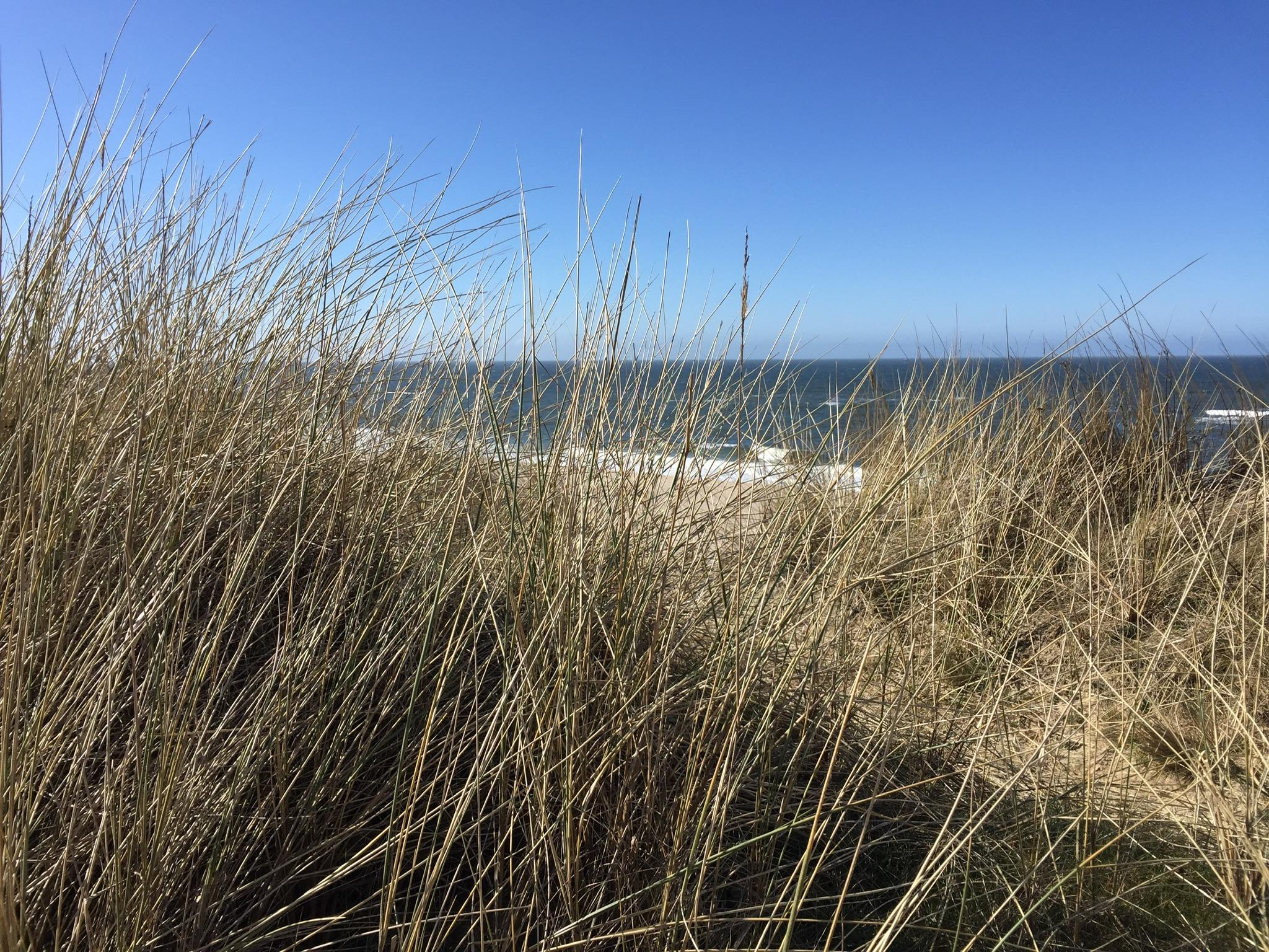 Raus aus dem Stress! Dein Weg zu innerer Ruhe und Entspannung — Live-Online-Workshop